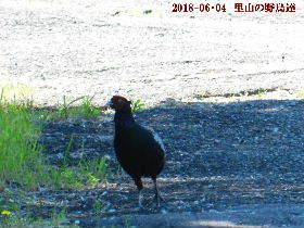 2014-06・04 里山の野鳥達 (2).JPG