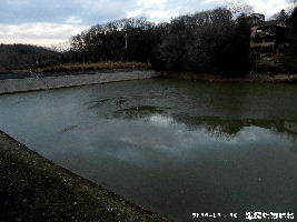 2018-01・15 散歩道脇の池面には (2).JPG
