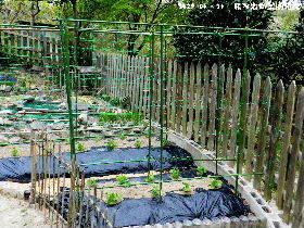 2018-04・14 我が家の菜園模様・・・ (4).JPG