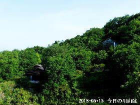 2018-05・15 今日の里山は・・・ (4).JPG