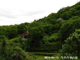 2018-05・19 今日の里山は・・・ (4).JPG