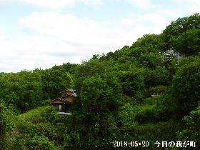 2018-05・20 今日の里山は・・・ (4).JPG