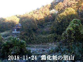 20018-11・24 今日の里山は・・・ (5).JPG