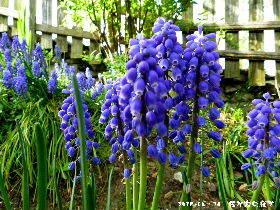2018--04・16 我が家の庭で (2).JPG