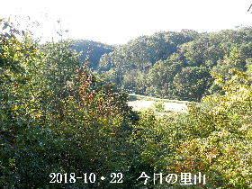 2018--10・22 今日の里山は・・・ (3).JPG