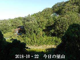 2018--10・22 今日の里山は・・・ (4).JPG