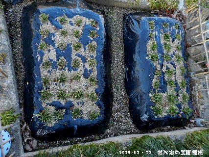 2018-02・12 我が家の菜園模様.JPG