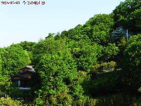 2018-05・05 今日の里山は・・・ (4).JPG