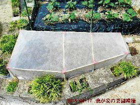 2018-05・17 我が家の菜園模様 (1).JPG