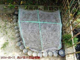 2018-05・17 我が家の菜園模様 (2).JPG