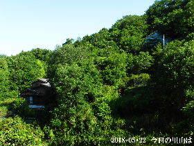 2018-05・22 今日の里山は・・・ (4).JPG