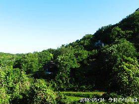 2018-05・24 今日の里山は・・・ (4).JPG