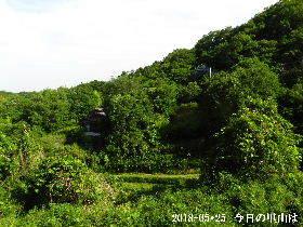 2018-05・25 今日の里山は・・・ (4).JPG
