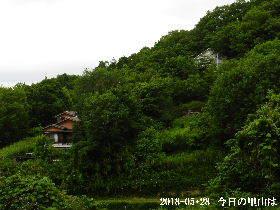 2018-05・28 今日の里山は・・・ (4).JPG