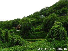 2018-06・11 今日の里山は・・・ (4).JPG