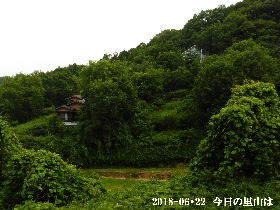 2018-06・22 今日の里山は・・・ (4).JPG