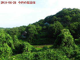 2018-06・26 今日の里山は・・・ (4).JPG