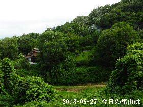 2018-06・27 今日の里山は・・・ (4).JPG