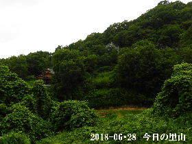 2018-06・28 今日の里山は・・・ (4).JPG