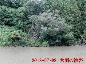 2018-07・08 今日の出遭い・・・ (1).JPG