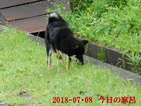 2018-07・08 今日の麻呂 (2).JPG