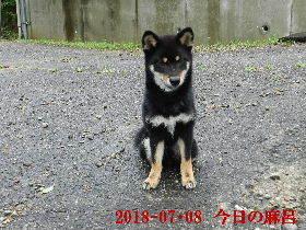 2018-07・08 今日の麻呂 (4).JPG