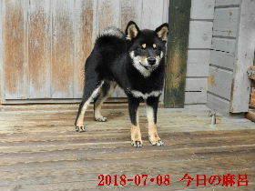 2018-07・08 今日の麻呂 (8).JPG