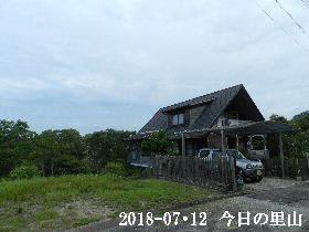 2018-07・12 今日の里山は・・・ (1).JPG