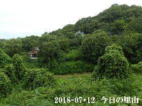 2018-07・12 今日の里山は・・・ (4).JPG