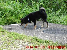 2018-07・12 今日の麻呂 (1).JPG