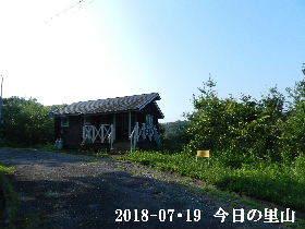 2018-07・19 今日の里山は・・・ (2).JPG