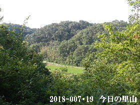 2018-07・19 今日の里山は・・・ (3).JPG