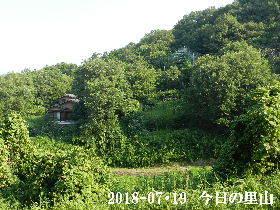 2018-07・19 今日の里山は・・・ (4).JPG