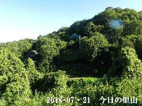 2018-07・21 今日の里山は・・・ (4).JPG