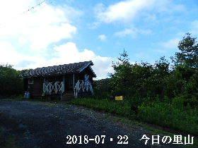 2018-07・22 今日の里山は・・・ (2).JPG