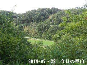 2018-07・22 今日の里山は・・・ (3).JPG
