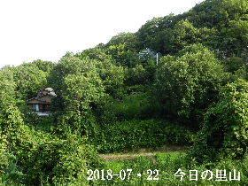 2018-07・22 今日の里山は・・・ (4).JPG