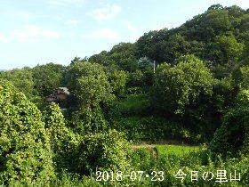 2018-07・23 今日の里山は・・・ (4).JPG
