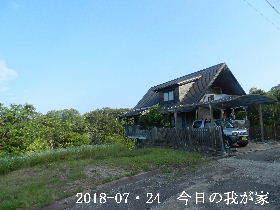 2018-07・24 今日の里山は・・・ (1).JPG