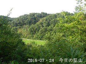 2018-07・24 今日の里山は・・・ (3).JPG