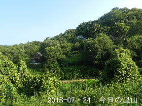 2018-07・24 今日の里山は・・・ (4).JPG