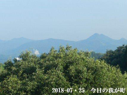 2018-07・25 今日の我が家.JPG
