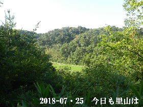 2018-07・25 今日の里山は・・・ (3).JPG