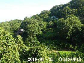 2018-07・25 今日の里山は・・・ (4).JPG