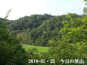 2018-07・26 今日の里山は・・・ (3).JPG