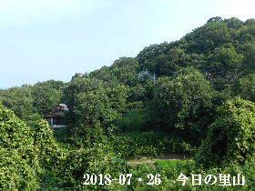 2018-07・26 今日の里山は・・・ (4).JPG