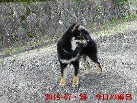 2018-07・26 今日の麻呂 (1).JPG