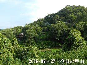2018-07・27 今日の里山は・・・ (4).JPG