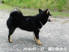 2018-07・27 今日の麻呂 (2).JPG