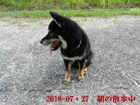 2018-07・27 今日の麻呂 (3).JPG